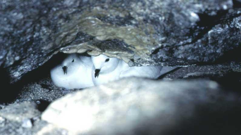 Fixing Antarctica: Low Spirits